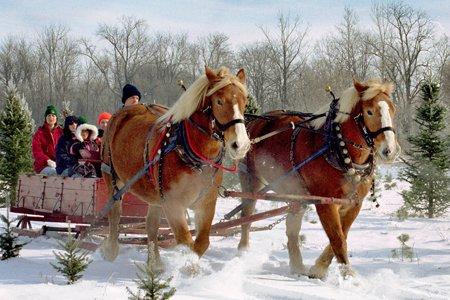 Christmas traditions on our farm – Ohio Ag Net | Ohio's ...