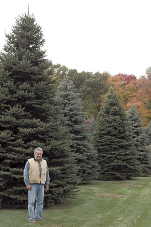 there are currently 35000 to 40000 trees planted on 60 to 70 acres on duke wheelers whitehouse tree farm the ohio christmas tree association