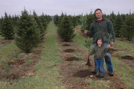 Planting trees is very hard work, but it is a great chance to work  side-by-side with family. - The Planting Season Has Started For Christmas Trees €� Ohio Ag Net