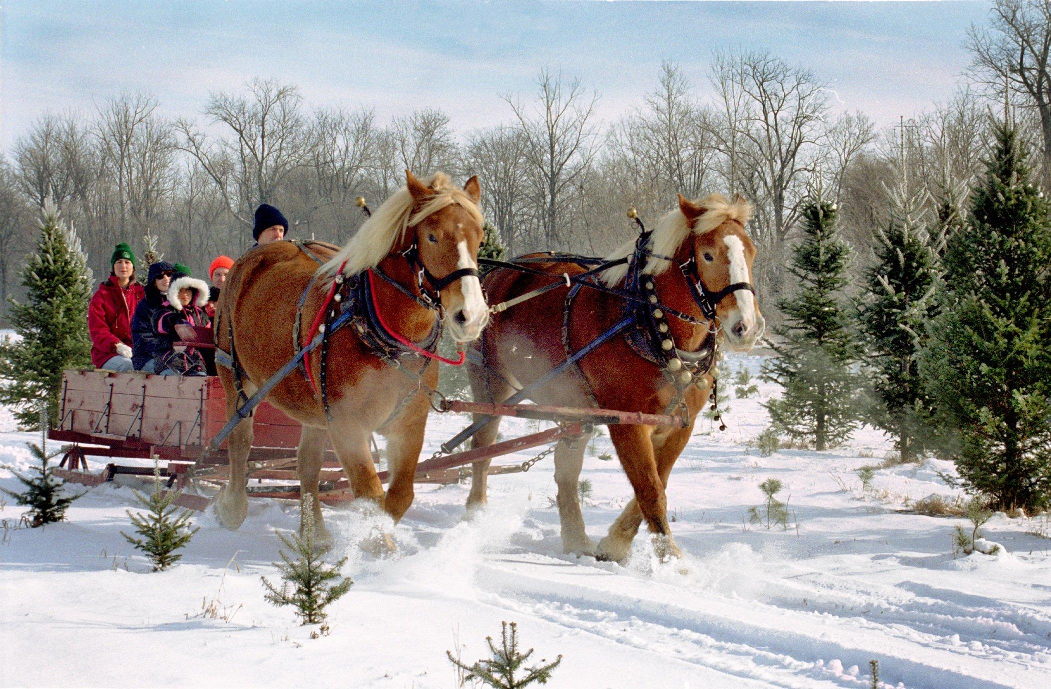 Buy Your Wife A Fir For Christmas Ohio Ag Net