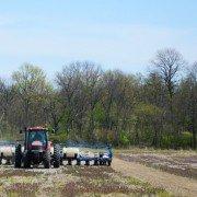no-till corn planting