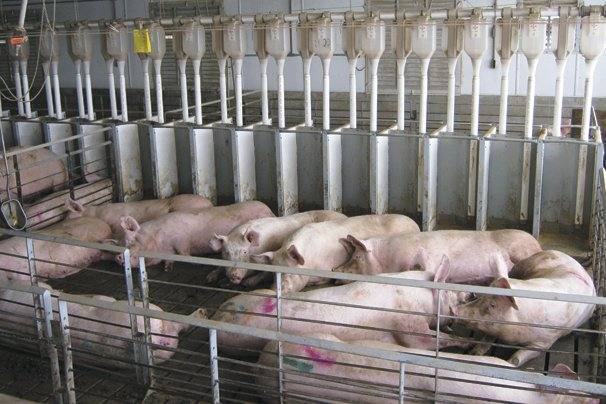 Profits for pork on the horizon – Ohio Ag Net | Ohio's