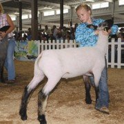 Margo Sturgis, 9, from Wayne County, holds on to her grade lamb.