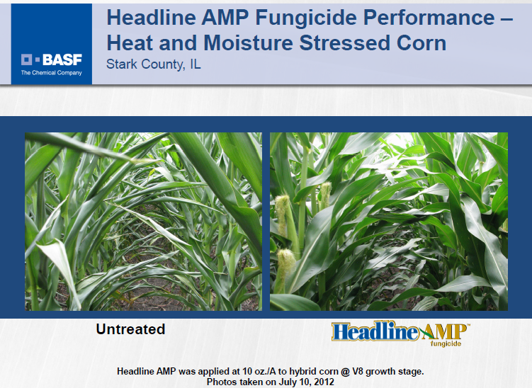 Fungicides in a dry year: Plant health gimmick or miracle of