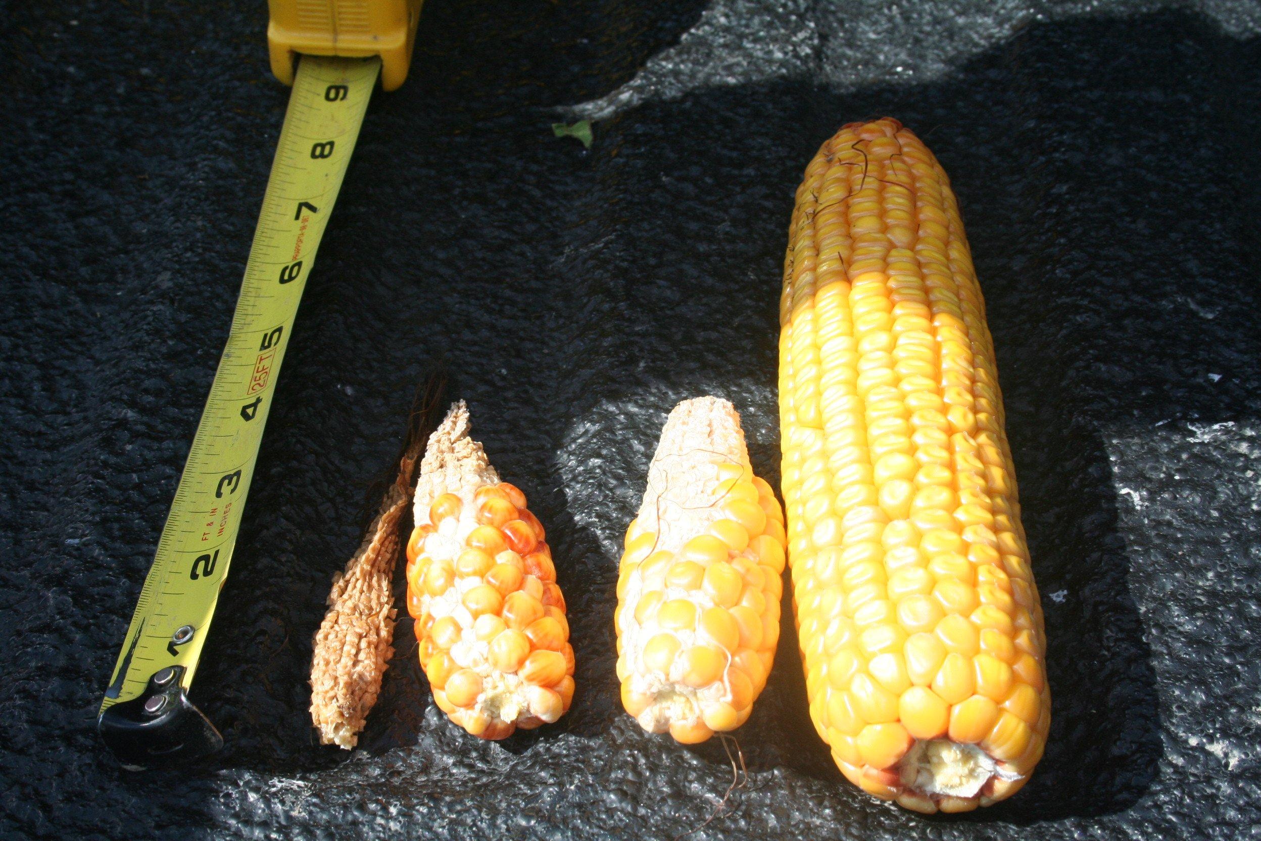 Pro Farmer Tour  Results