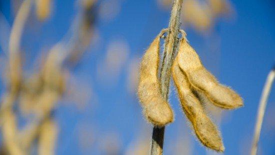 Beans 2012