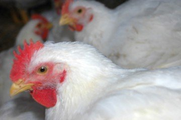 Poultry farm fighting legal battle with nationwide ...