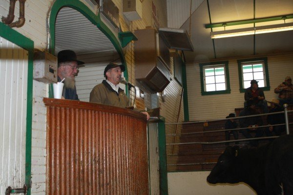 auctioneer-at-kidron-auction