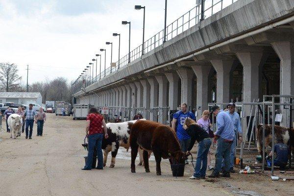 beef-expo-activity