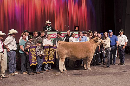champion-steer-formal