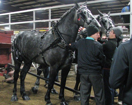 Gordyville Percherons from Ohio