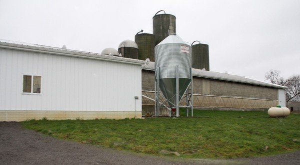 horst-freestall-barnmilk-parlor