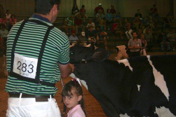 HolsteinShow