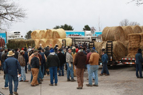 kidron-auction-hay-auction