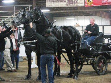Flat Rock Farm Percheron Mares
