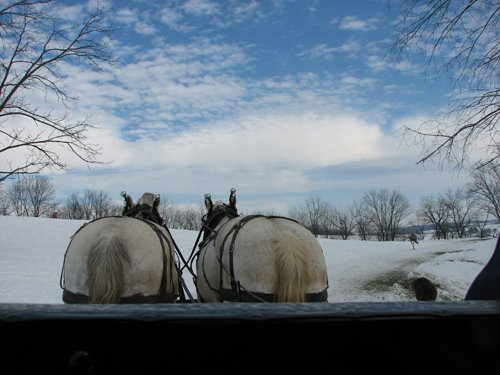 the-farm-at-walnut-creek-draft-horses