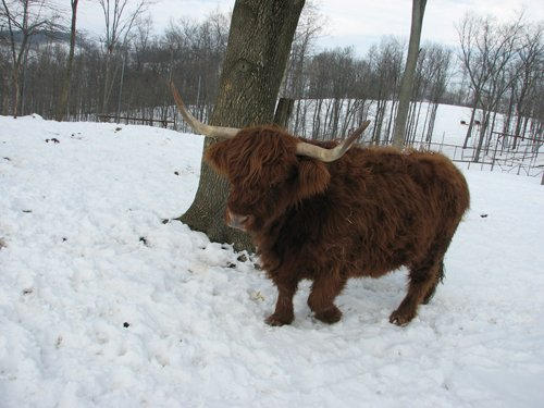 the-farm-at-walnut-creek-scotch-highland