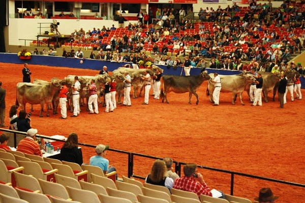 world-dairy-expo-show-ring