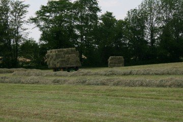 I was so excited to be assured of my 2013 hay that I took a photo of it while it sat on wagons waiting for me to take it to my barn.