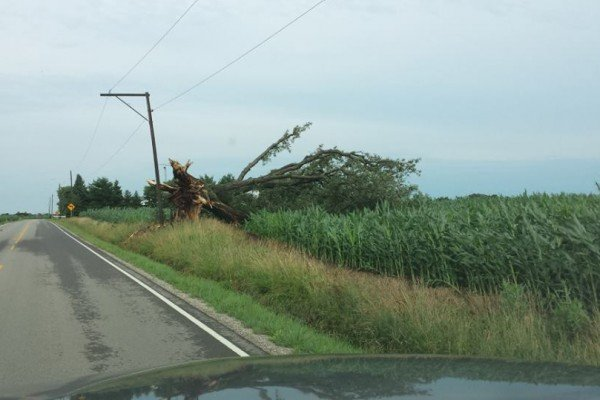 A tree completely blew over near Bucyrus.