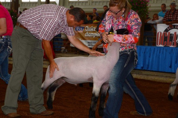 Sarah Hunker, from Bellevue, competes for the top Hampshire spot. She ended up with Reserve Champion Hampshire.