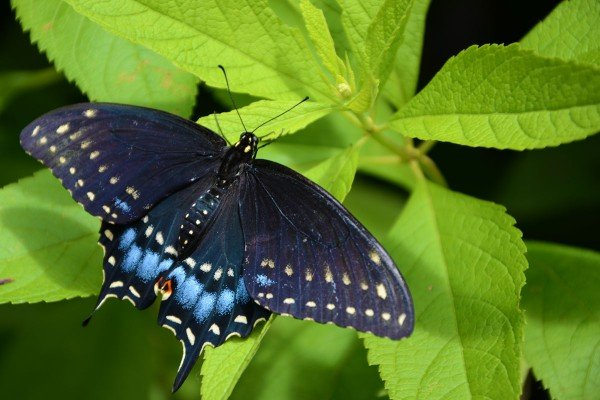 Butterflies are on display for fair vistors in the Natural Resources Conservation Area.