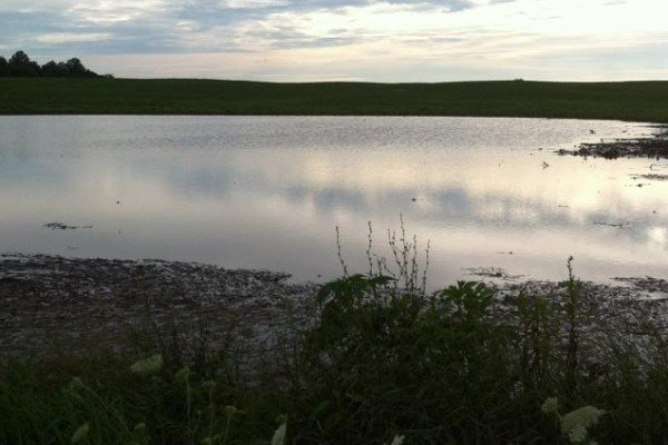 Soybean field flooded by heavy rains in Johnstown.