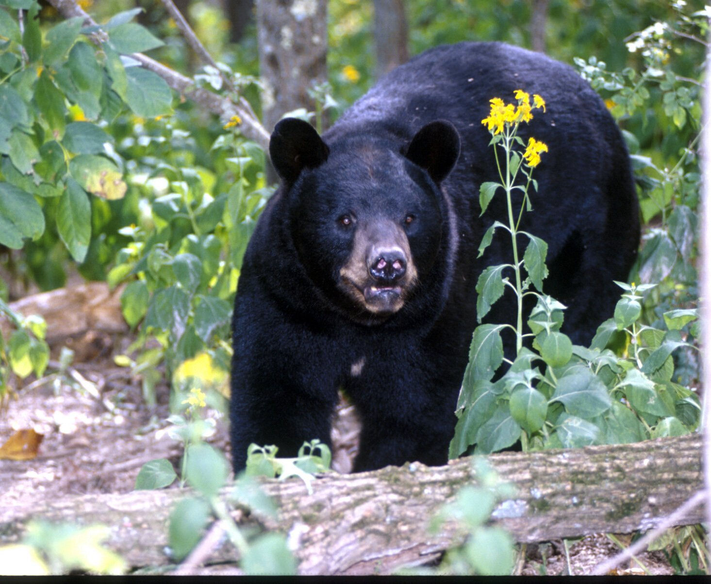 How many species of bears exist in nature