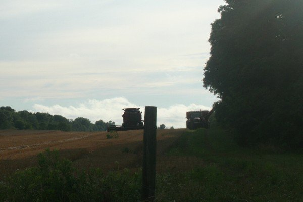 Wheat harvest on North Old State road in Delaware County abrubtly halted by the storm.