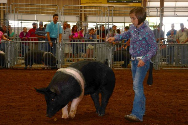 Gracee Stewart, Sabina, with her Junior Hampshire gilt