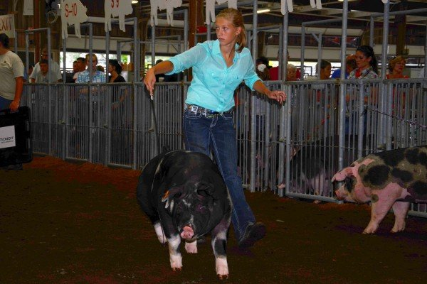 Taylor Weickert, from Lindsey, shows her Spot barrow around the ring.