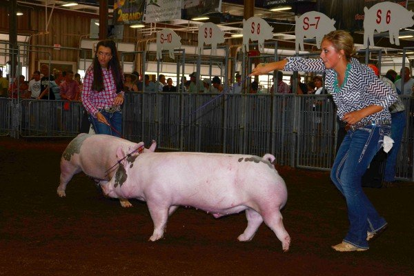 Hannah Frobose, Wood County, was the Class 12 winner with her cross bred barrow.