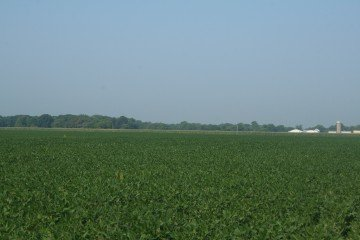 Peoria County, Illinois soybeans
