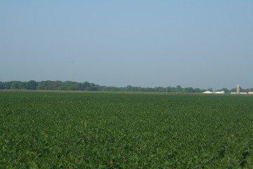 Peoria County, Illinois soybeans