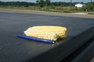 Corn well behind in Fulton County, Illinois