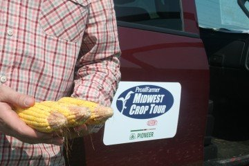 A sample of Knox County, Illinois corn