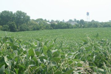 Henry County, Illinois bean field #2