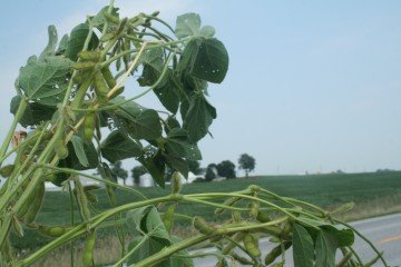 Scott County, Iowa soybeans