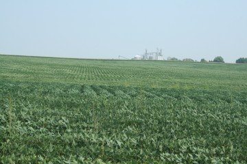 Cedar County, Iowa soybeans