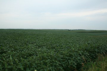 Our last bean field in Clayton County, Iowa
