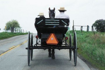 More in Ohio's Amish communities looking to sheep as an option for success on their farms. Photo by Ed Chatfield.