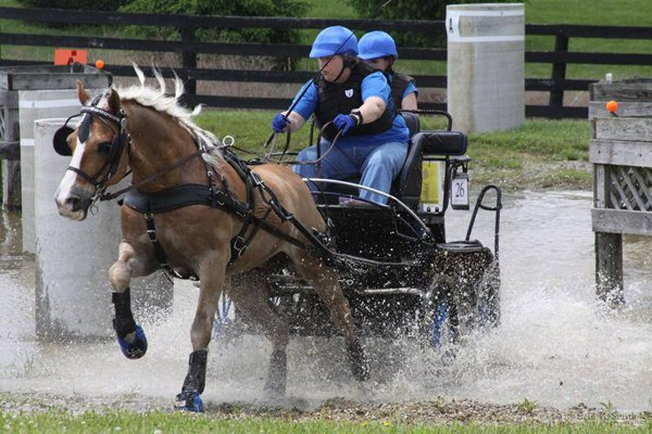 Veterinarian College Dean Becomes Combined Driving