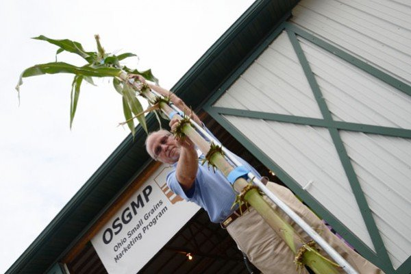 Brad Moffitt, with the OCWGA, holds an 18.5-foot tall corn stalk entered in the tall stalk contest by John Juhasz of Williams County.