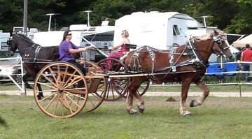 Dixie and Susan Timmons competed in the Ladies Draft Horse Cart Class at the 2013 Morrow County Fair.