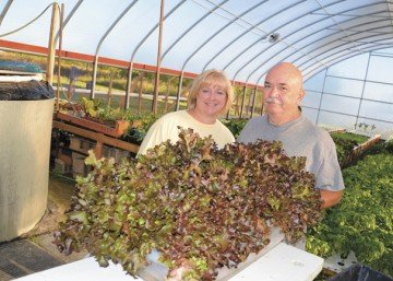 Doug and Jeni Blackburn feed crops starting with ammonia produced by perch in this Union County aquaponics greenhouse. The perch are in the tank to the left and the water is gravity fed to the crops.