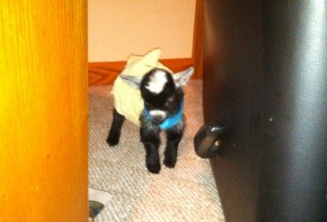 Even with a diaper in place to help eliminate messes and slow him down, this baby found a hiding spot.