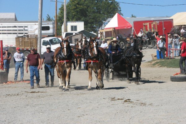 Horses drive in and out of the arena at the same time that horses are line driving to wagons to hitch.