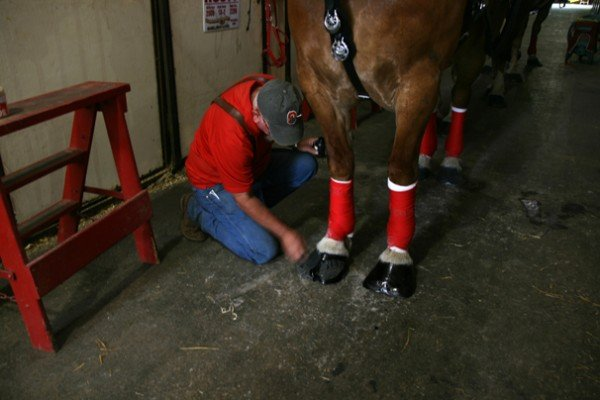 Steve Wickersham blacks hooves in preparation for the show.