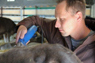 Phillip Topp puts the final touch on a Brown Swiss heifer from Topp-View Farm of Botkins.
