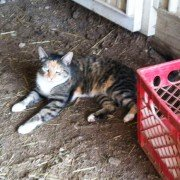 Does a celebrity owning a cat qualify as an agricultural expert?